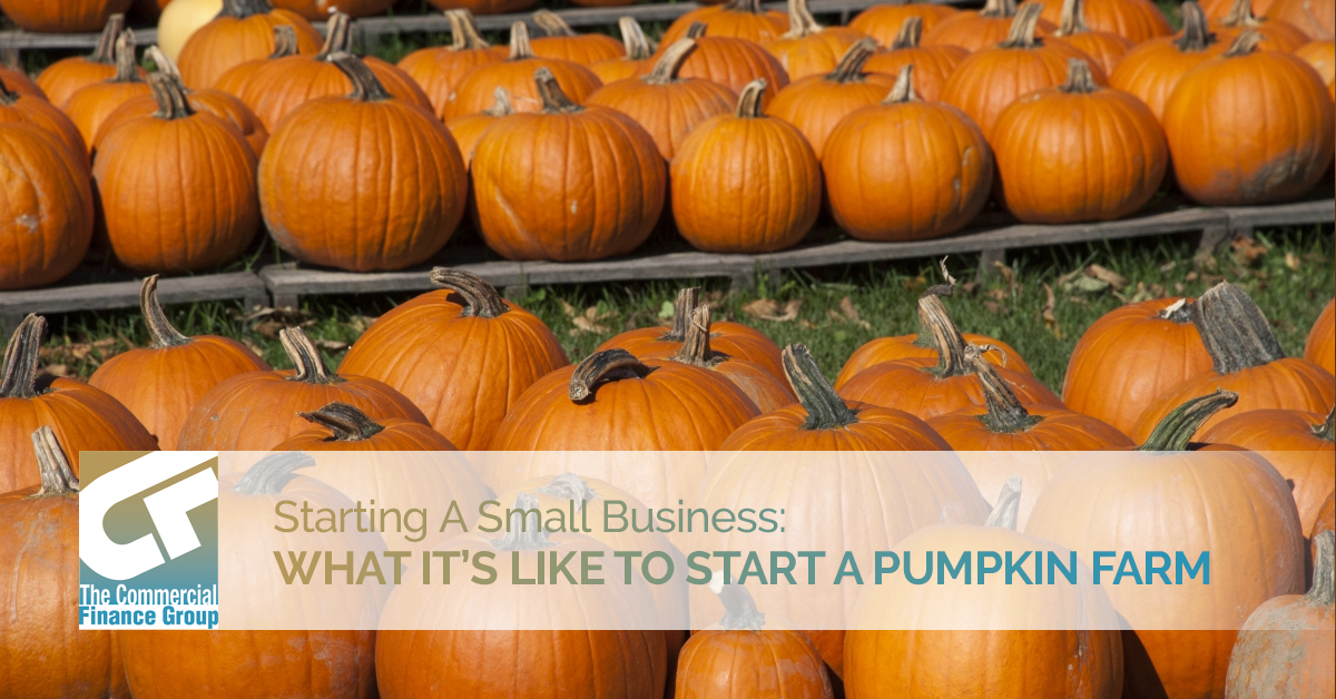 Starting A Small Business What It's Like To Start A Pumpkin Farm